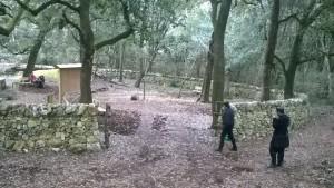 Pianelle bosco 6